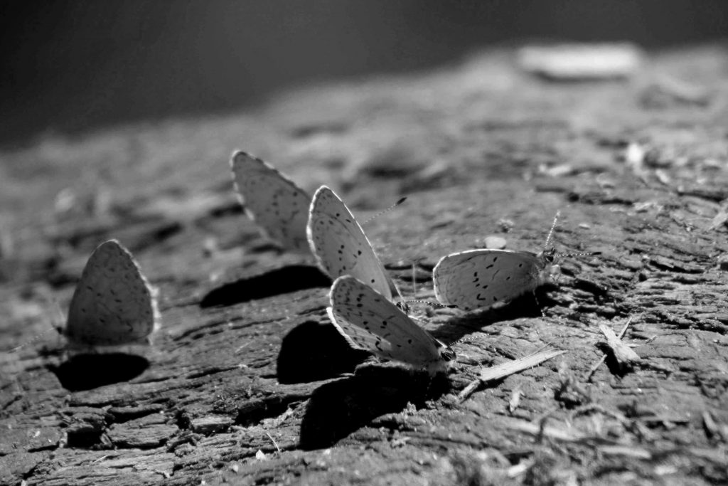 bw 5 moths IMG_8089