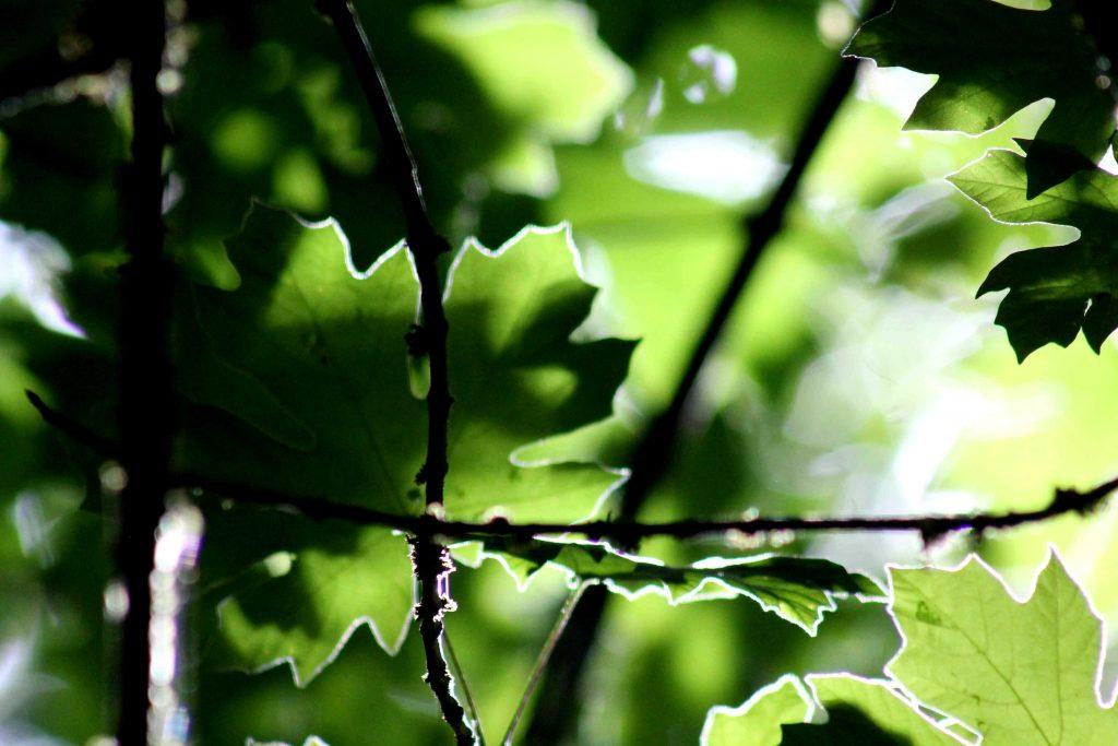 green IMG_7885