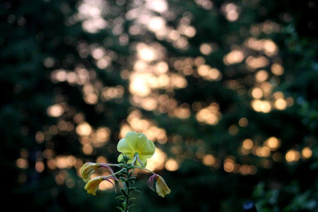 yellow IMG_8919