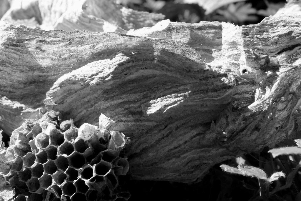 bw hive IMG_9486