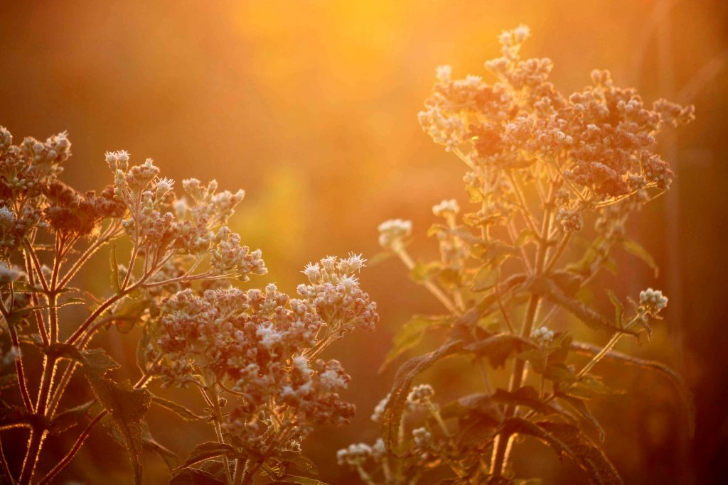 boneset-sunset-img_0143