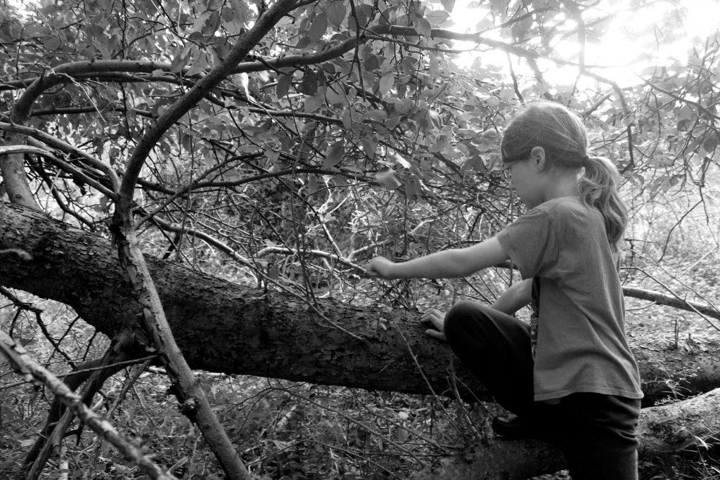 bw-trees-img_0829