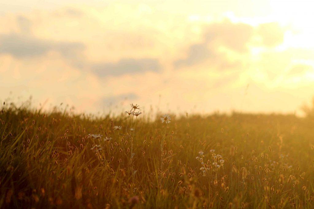 daisies-img_0124