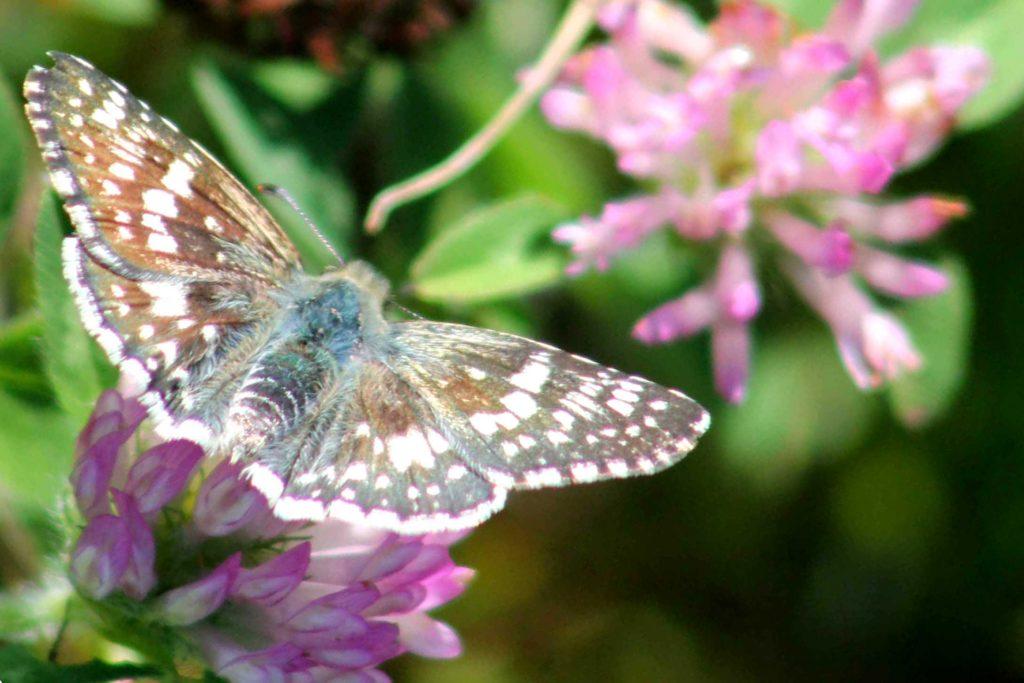 moth-img_0425
