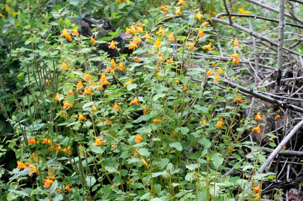 q-orange-img_0841