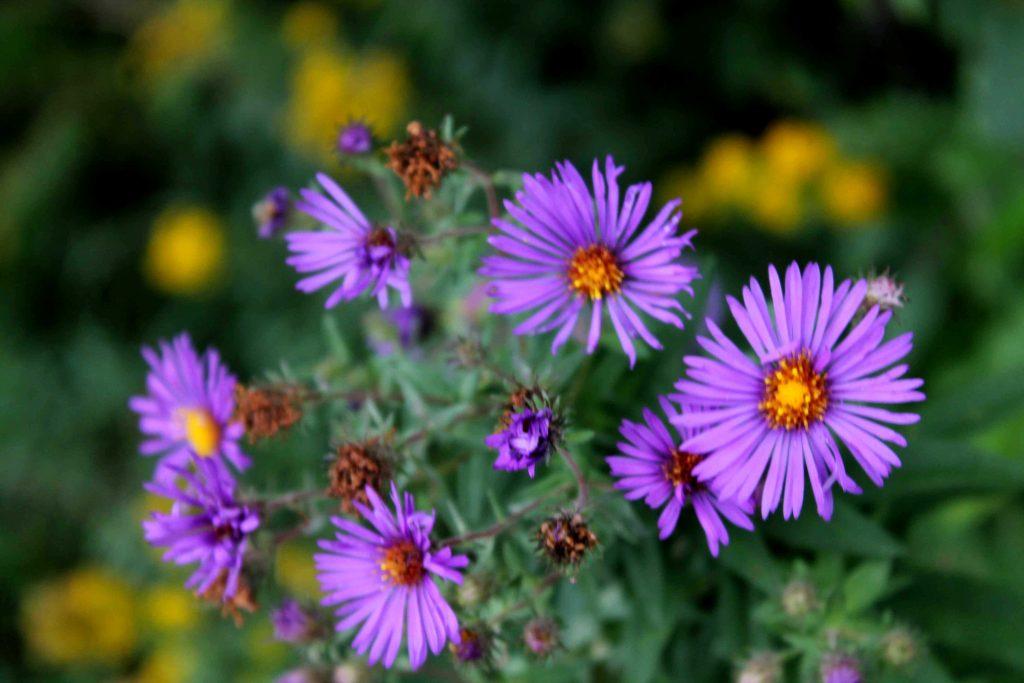q-purple-img_0900