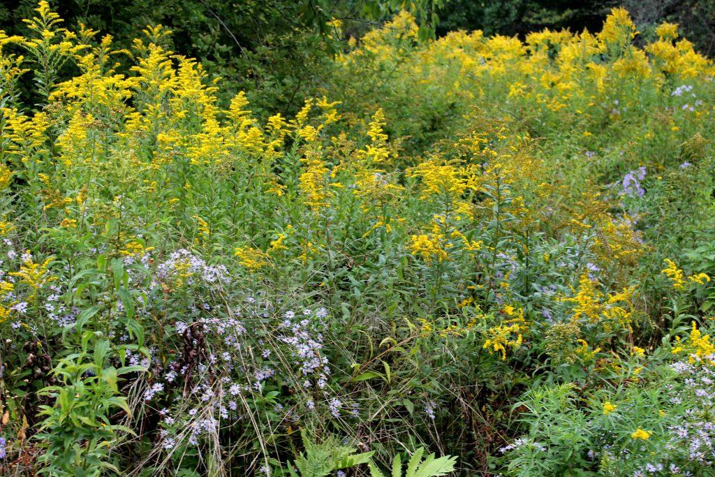 q-yellow-img_0831