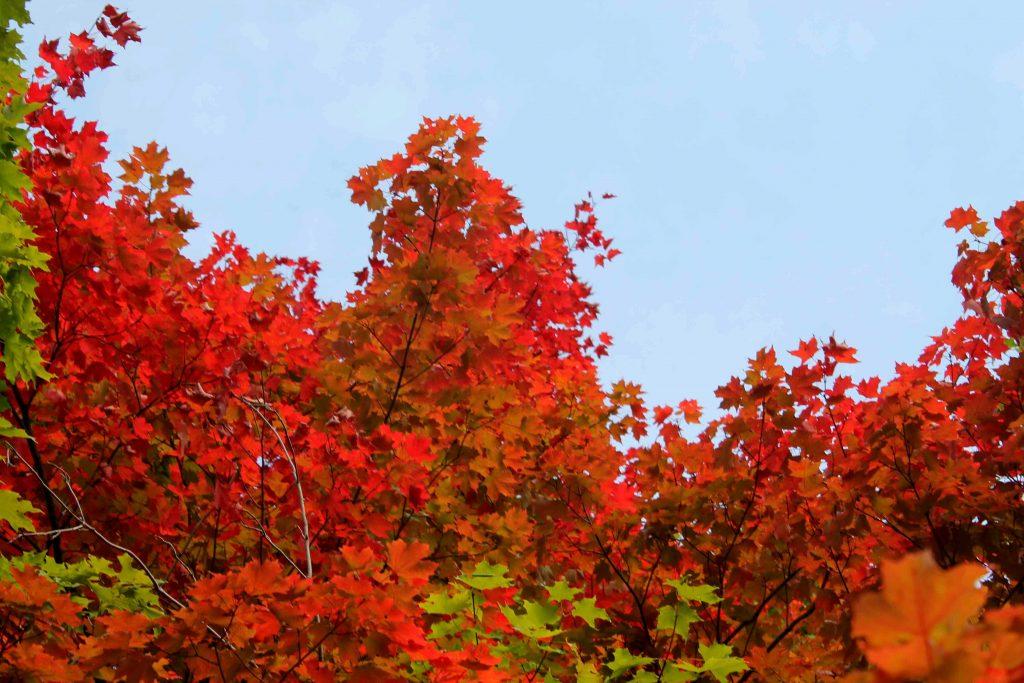 red-orange-img_1207