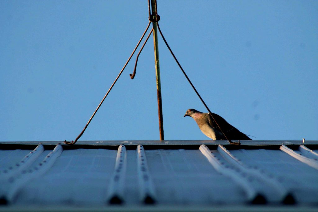 roof-img_0628