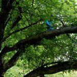 trees-img_0817