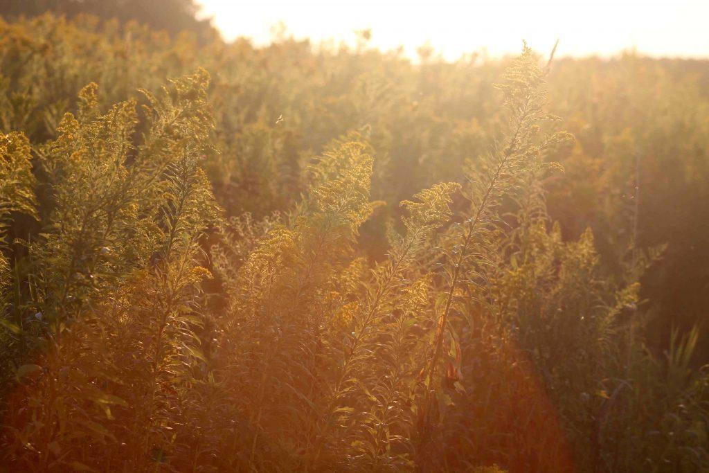 yellow-img_0104
