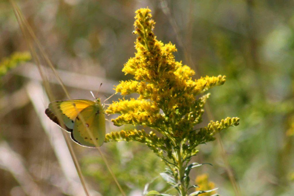 yellow-img_0174