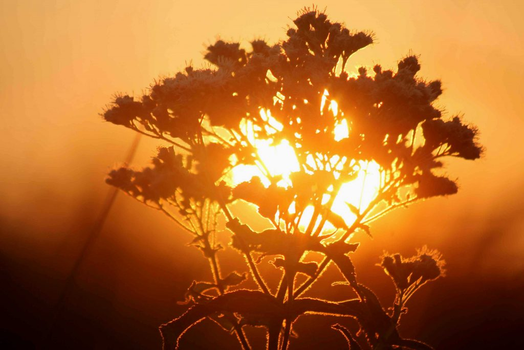 yellow-boneset-img_0139