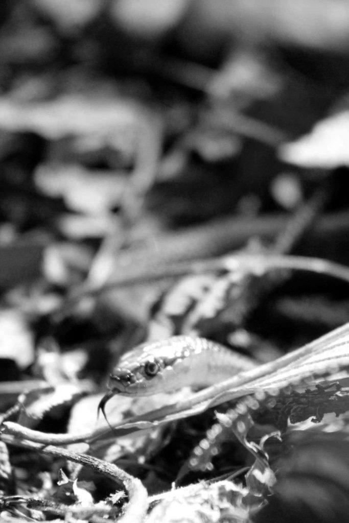 bw-snake-img_1536