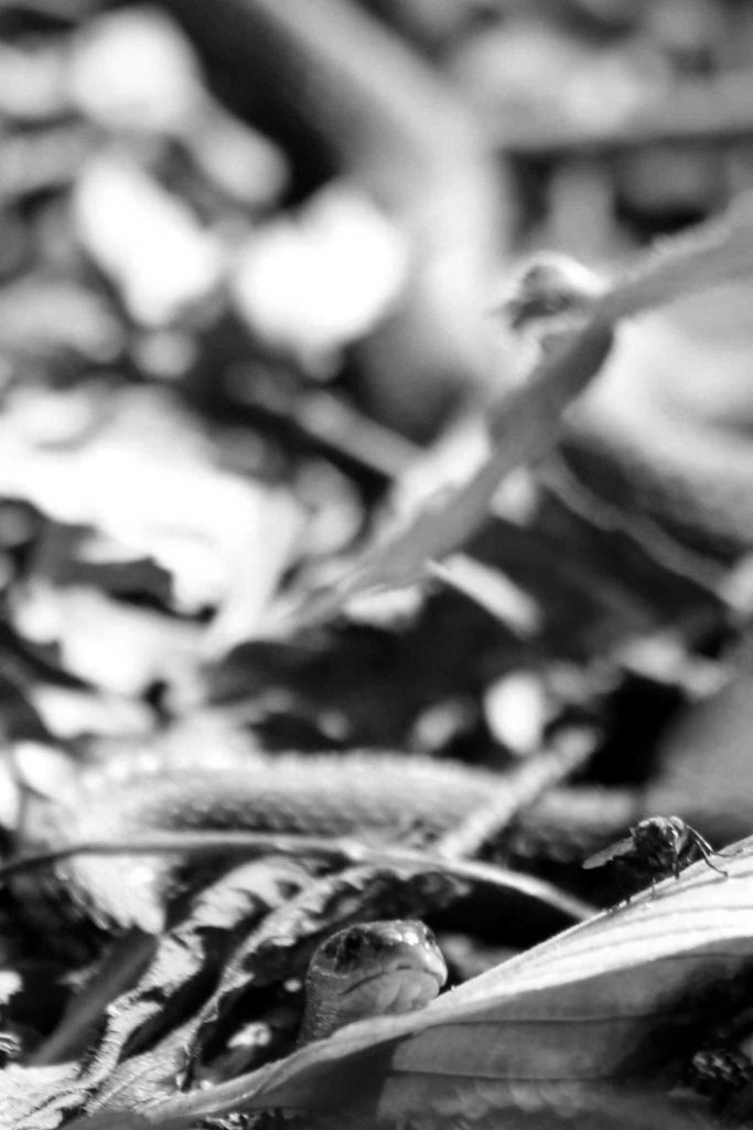 bw-snake-fly-img_1547