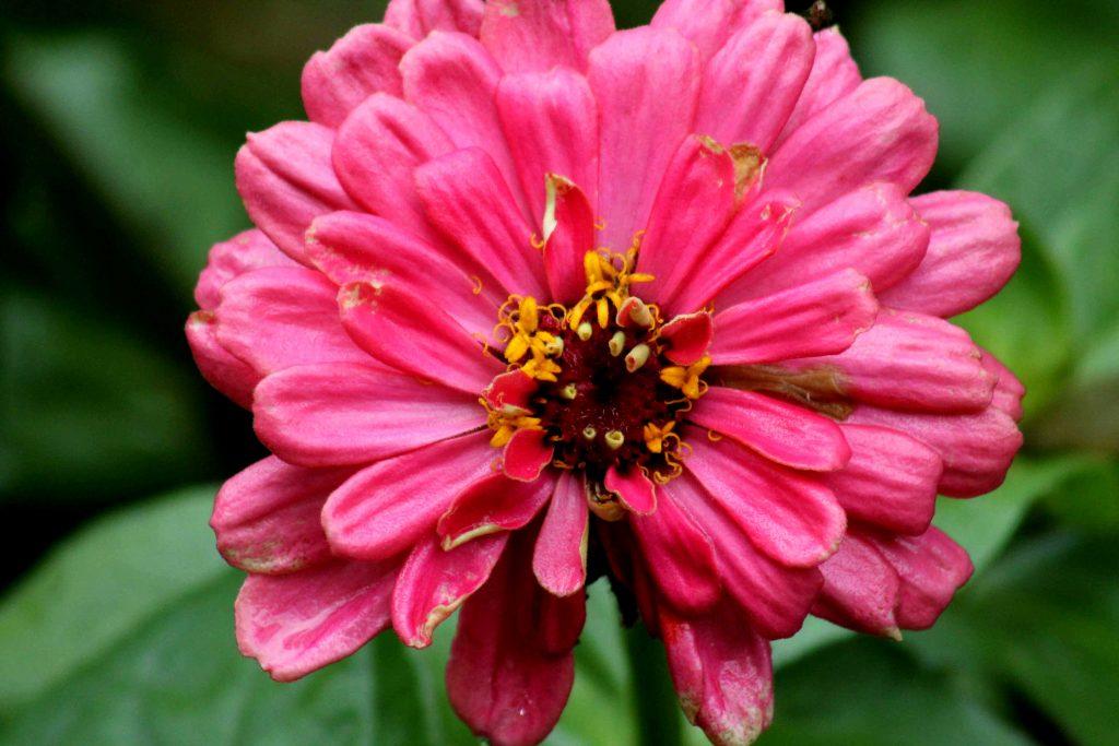 pink-img_1439
