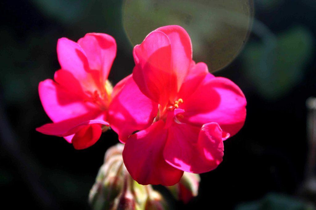 red-violet-img_1489