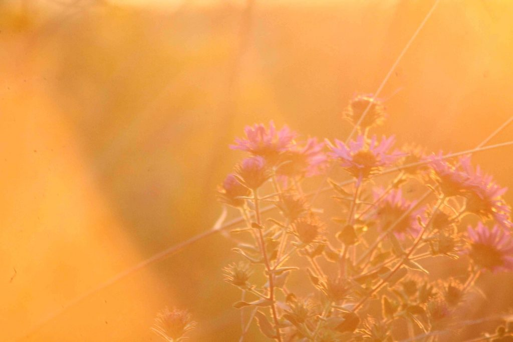 sunset-img_0135