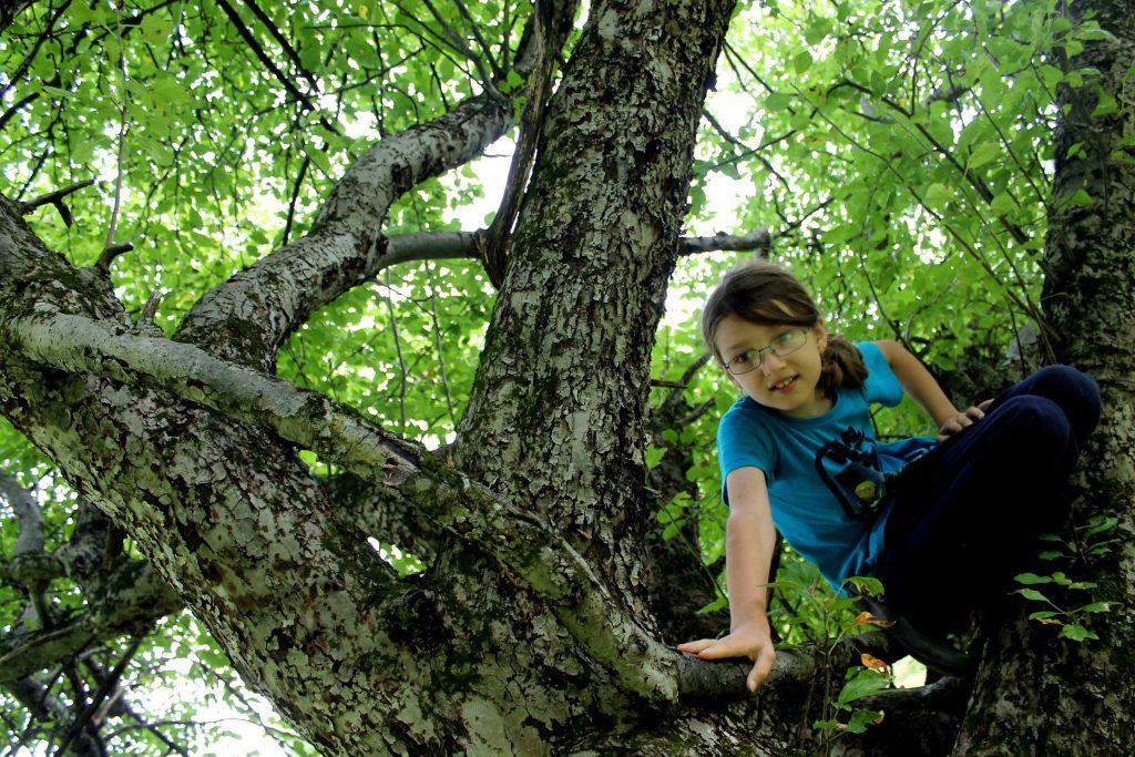trees-img_0813