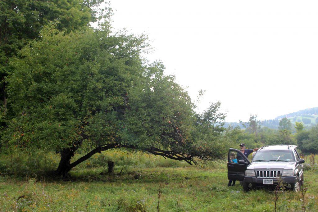 trees-img_0825