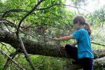 trees-img_0829