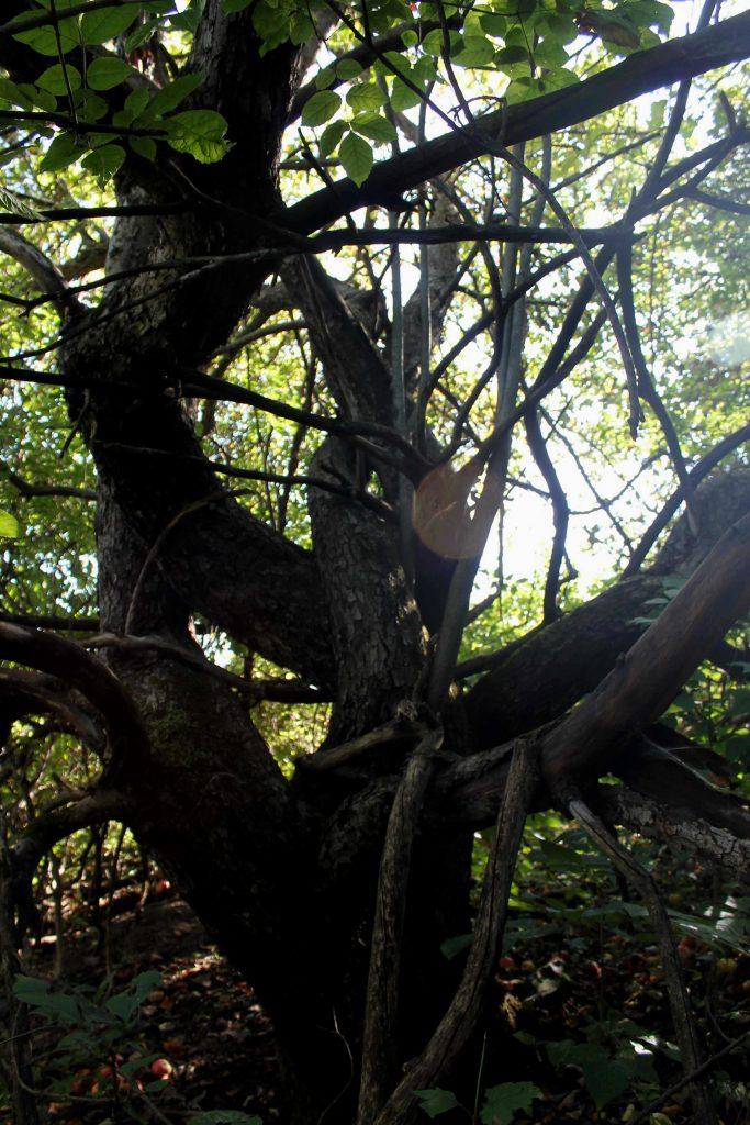 trees-img_1068