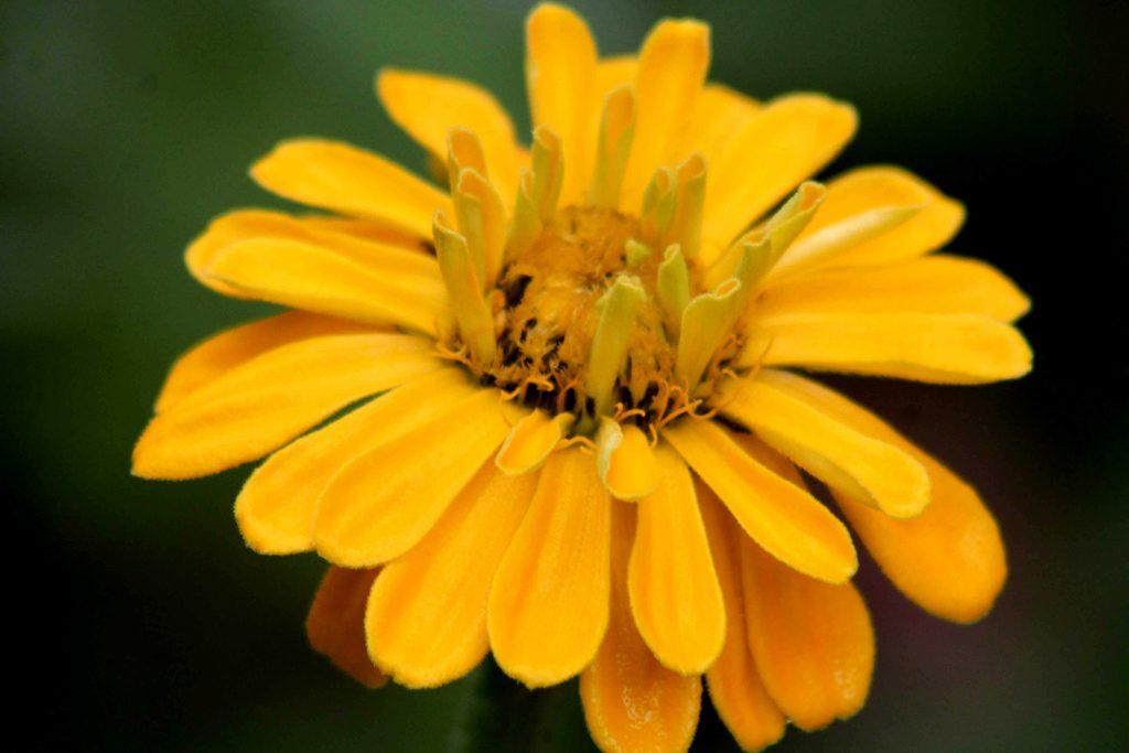 yellow-img_1447