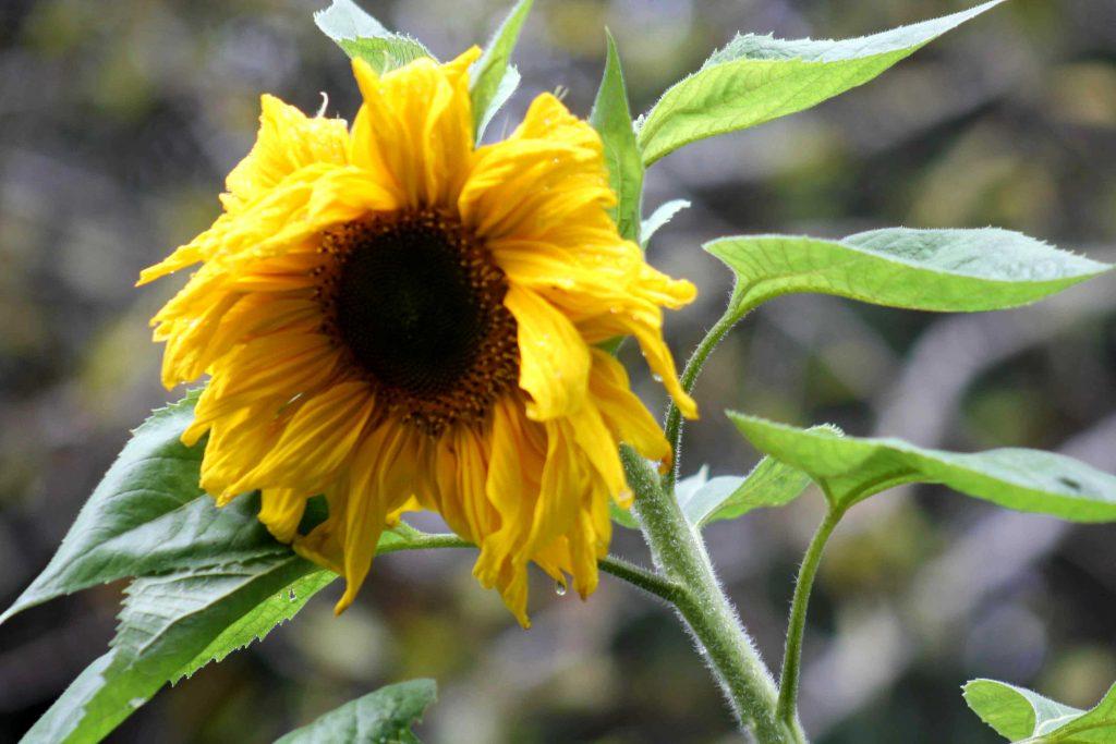 yellow-img_1450