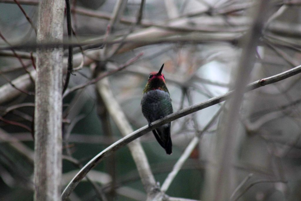 red-img_2444
