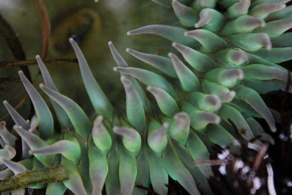 anemone detail macro