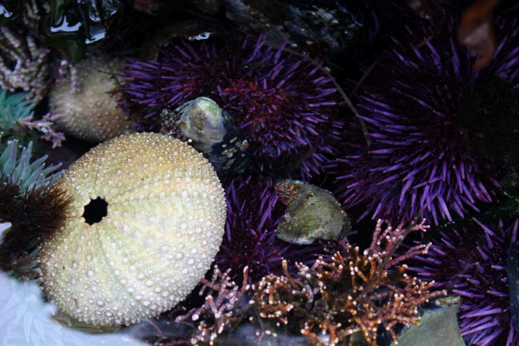 sea urchins and anemones