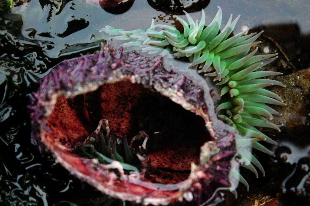 urchin and anemone